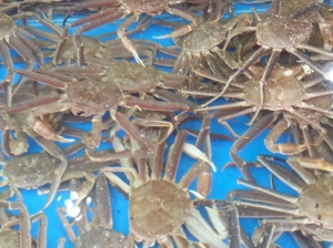 The baby crabs
